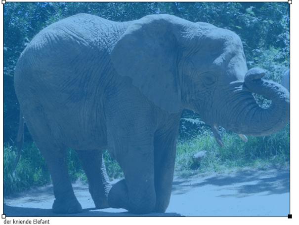 Joomla Bild markiert, um die Größe des Bildes mit der Maus zu verändern