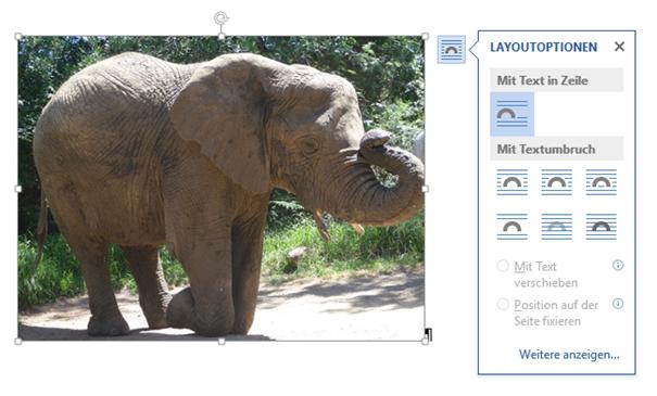 Die verschiedenen Layout Optionen beim Einfügen von Bildern in Word